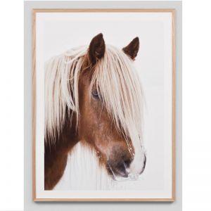 Cavallo Haflinger Horse Photograph | Framed Photographic Print