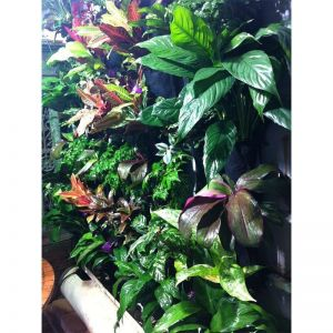 Cityforest Greenwall Pockets | 1 Pack | BUY 4 GET 5th FREE