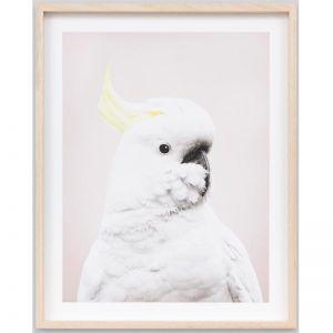 Cockatoo Pastel 1 | Framed Photographic Print