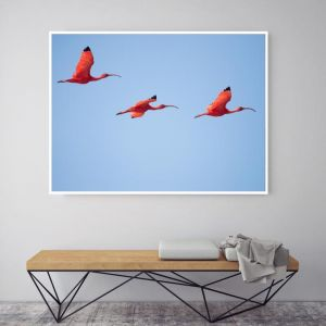 Come Fly With Me | Canvas Art