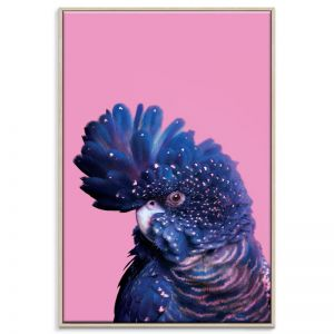 Confident Cocky on Pink | Prints and Canvas by Photographers Lane