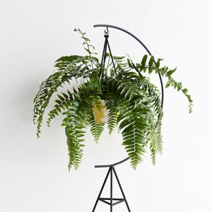 Crescent Plant Stand in Black or White | by Capra Designs
