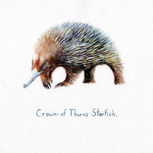 Crown of thorns starfish | Original Watercolour Artwork