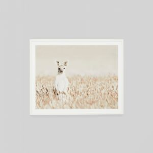 Curious Kangaroo | Framed Photographic Print