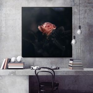 Deep Rose | Prints and Canvas by Photographers Lane