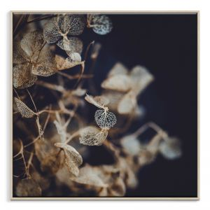 Delicate 1 | Canvas or Print by Artist Lane