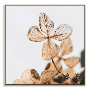 Delicate 2 | Canvas or Print by Artist Lane