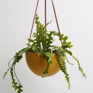 Dome Hanging Pot | Desert | Capra Designs
