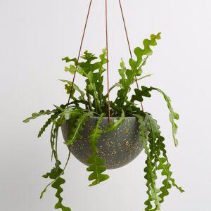 Dome Hanging Pot | Terrazzo Agave | Capra Designs
