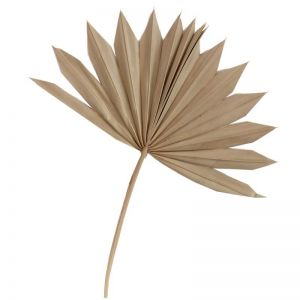 Dried Palm Sun | by Raw Decor