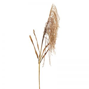 Dried Wheat Spray x 12 stems