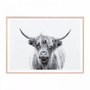 Duncan B+W Highland Cow | Framed Print | 41 Orchard