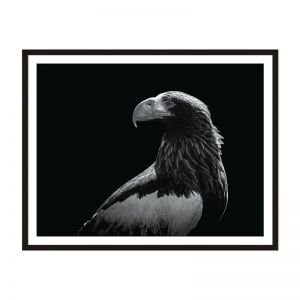 Eagle Eye | Framed Print | Artefocus