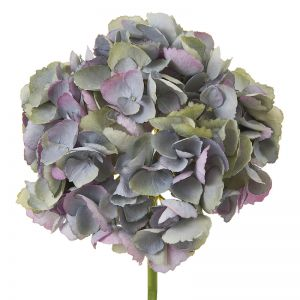 English Hydrangea | Blue - 6 Stems