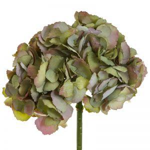 English Hydrangea   Green - 6 Stems
