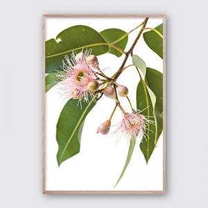Eucalyptus Dreaming #1 | Framed Giclee Art Print by Wall Style