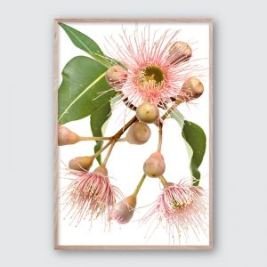 Eucalyptus Dreaming No.2 | Framed Giclee Art Print by Wall Style