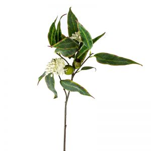 Eucalyptus Flower Spray - 12 Stems