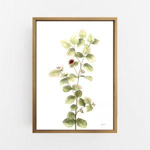 Eucalyptus Native Living Art 2 in White Fine Art Print by Pick a Pear | Canvas Wall Art