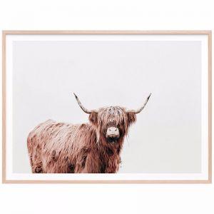 Fergus Highland Cow | Framed Print | 41 Orchard