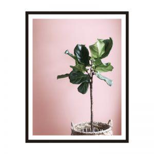 Fiddle Fig | Framed Print | Artefocus