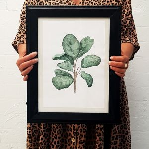 Fiddle Fig Leaf Watercolour Print