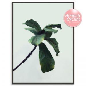 Fiddle Leaf | Hannah and Clint X Artist Lane