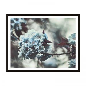 Floral Focus | Framed Print | Artefocus