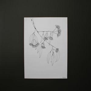 Flowering Gum Branch | Art Print