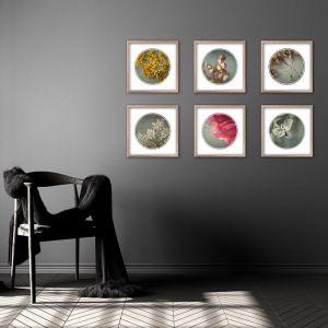 Foraged Texture Rounds | Set of 6 Art prints | Framed or Unframed