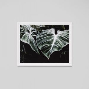 Forest Night 2 | Framed Photographic Print