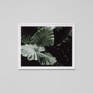 Forest Night 3 | Framed Photographic Print