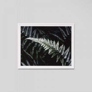 Forest Night 4 | Framed Photographic Print
