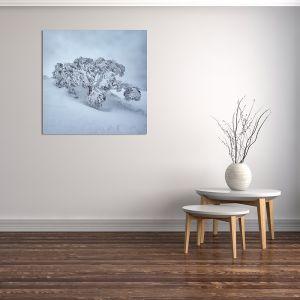 Frozen | Canvas Print by Scott Leggo