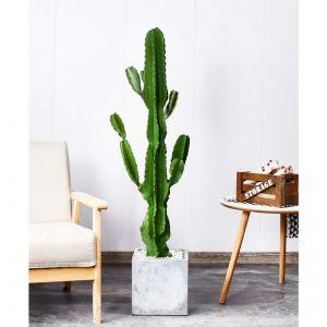Green Artificial Indoor Cactus Tree | 6 Heads