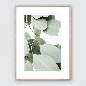 Hanging Eucalyptus 2 | Limited Edited Framed Giclee Art Print