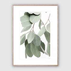 Hanging Eucalyptus No.1 | Limited Edited Framed Giclee Art Print