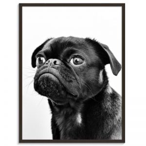 Henry | Prints and Canvas by Photographers Lane