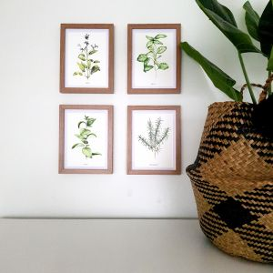 Herbs |  Watercolour Prints Set