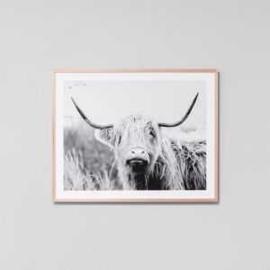 Highland Bovinae Grey | Framed Photographic Print