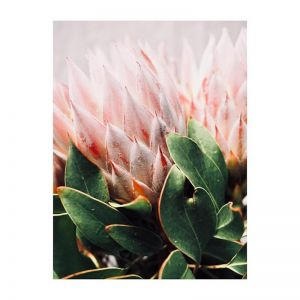 Holly | Photographic Art Print by Flowers for Kate