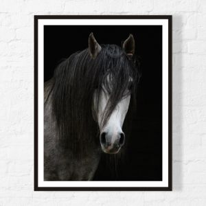 Horse | Framed Print | Artefocus
