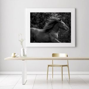 Horse Power | Photographic Art Print by Black Colt Photography