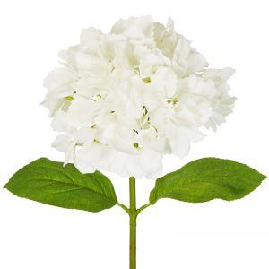 Hydrangea | 50cm | White 6 x Stems