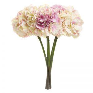 Hydrangea | Pink