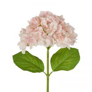 Hydrangea Stems   50cm   Pink 6 x Stems