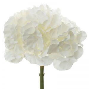 Hydrangea | White