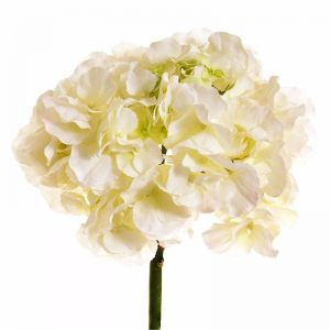 Hydrangea White 50cm