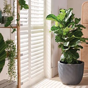 Indoor Plantation Shutters | Various Colours | Carpet Court