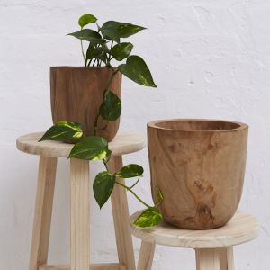 Iniko Tree Root Planter l Pre Order